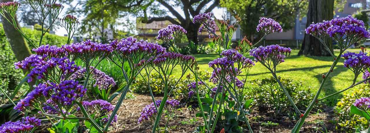 lawn care and gardening Brisbane